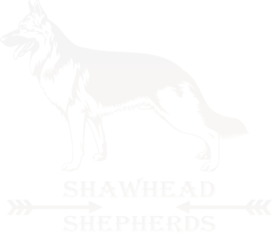 Shawhead Shepherds: Quality Working Line Straight-Backed German Shepherd Breeder in Cumbria